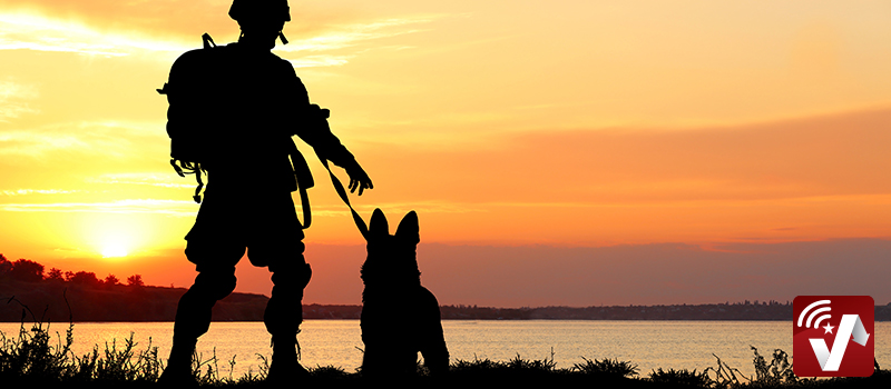 How Are Military Dogs Trained