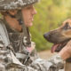 Military Service Dogs—They Are Veterans Too